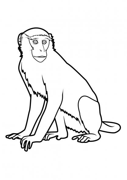 Coloriage singe 2 coloriage singes coloriage animaux - Dessin guenon ...