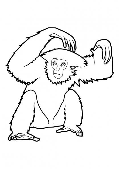 Coloriage singe 5 coloriage singes coloriage animaux - Coloriage gulli fr ...