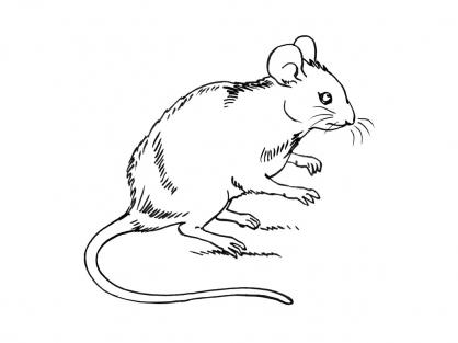 Coloriage souris 10 coloriage souris coloriage animaux - Coloriage petite souris ...