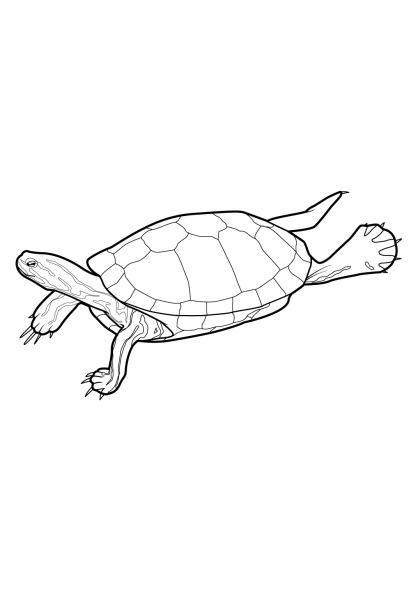 Coloriage Tortue 10