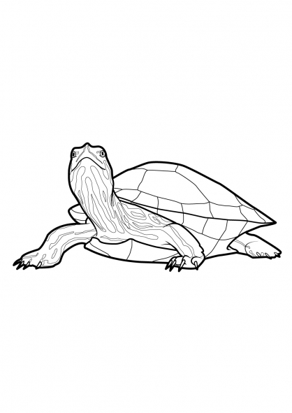 Coloriage Tortue 11