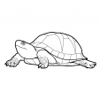 Coloriage Tortue 12