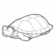 Coloriage Tortue 13