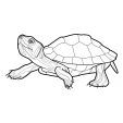 Coloriage Tortue 14