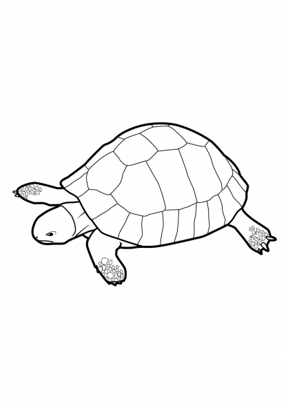 Coloriage Tortue 15