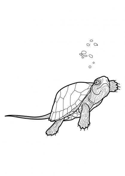 Coloriage Tortue 2