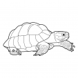 Coloriage Tortue 3