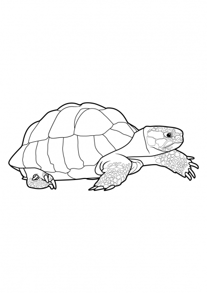 Coloriage tortue 3 coloriage tortues coloriage animaux - Dessin d une tortue ...