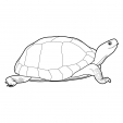 Coloriage Tortue 4