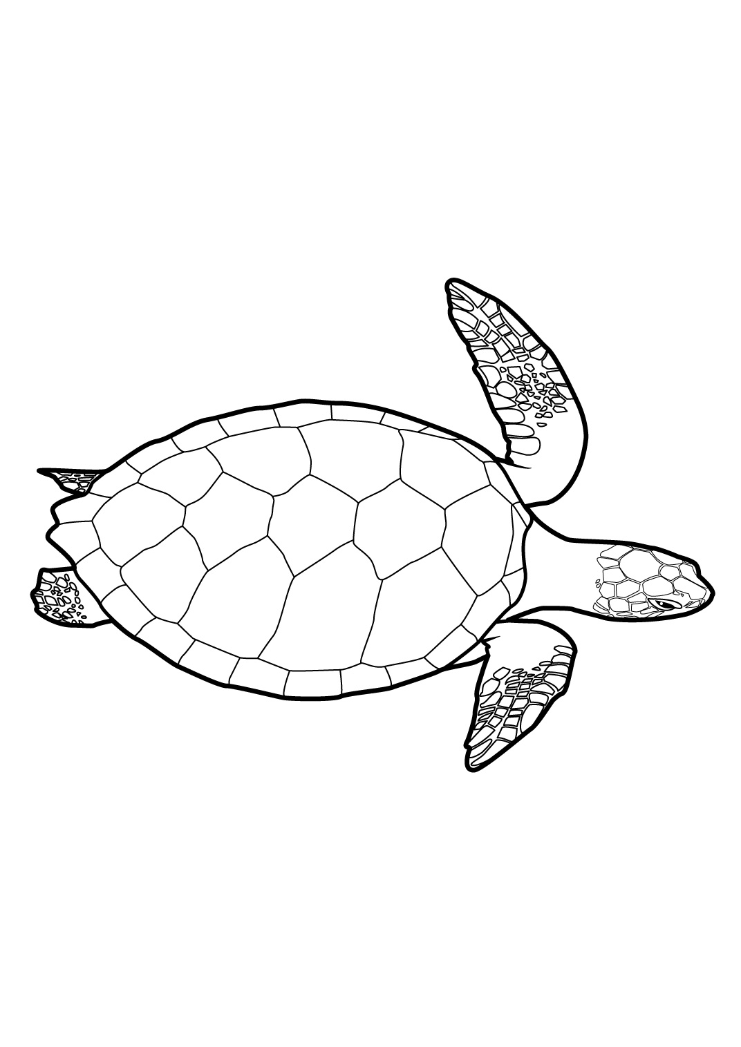 Coloriage tortue dessins colorier imagixs tattoo tattooskid - Tortue a colorier ...