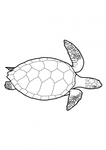 Coloriage Tortue 5
