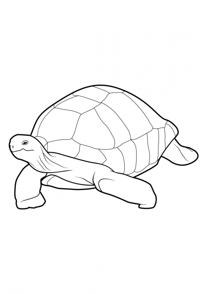 Coloriage Tortue 6