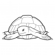 Coloriage Tortue 7