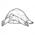 Coloriage Tortue 8