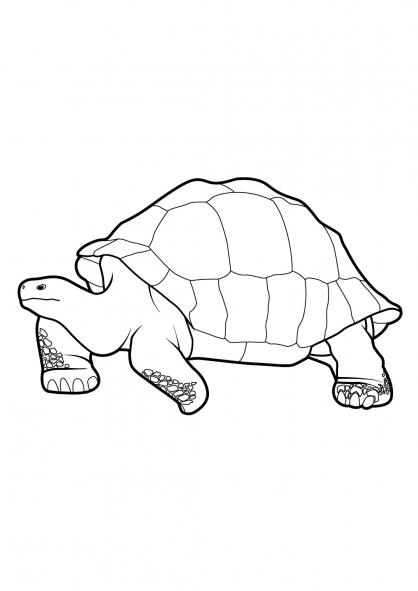 Coloriage Tortue 9