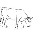Coloriage Vache 1