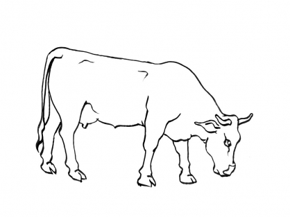 1000 images about vaches cerfs dessins on pinterest - Coloriage vache ...