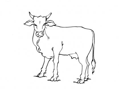 Coloriage Vache 10