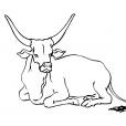 Coloriage Vache 12
