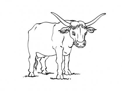 Coloriage Vache 14