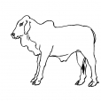 Coloriage Vache 4