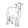 Coloriage Vache 5
