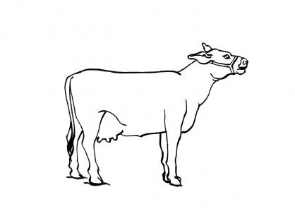 Coloriage Vache 6