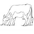 Coloriage Vache 8