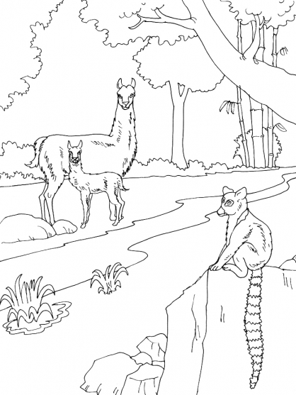 Coloriage Zoo 14