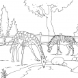 Coloriage Zoo 3