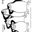Coloriage Les Pingouins de Madagascar : Une équipe de choc