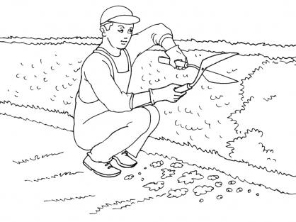 Coloriage Jardinier 15