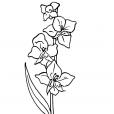 Coloriage Fleur 10