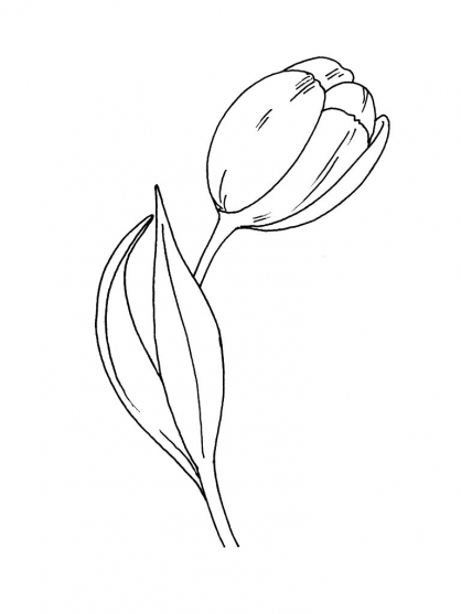 Coloriage fleur 11 coloriage fleurs coloriage nature - Coloriage fleur tulipe ...