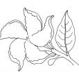 Coloriage Fleur 12