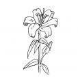 Coloriage Fleur 13