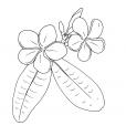 Coloriage Fleur 3