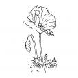 Coloriage Fleur 5
