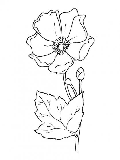 Coloriage Fleur 6