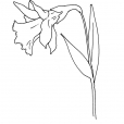 Coloriage Fleur 7