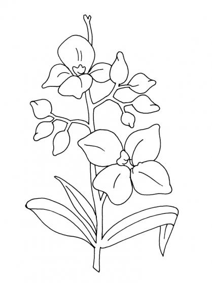Coloriage Fleur 9