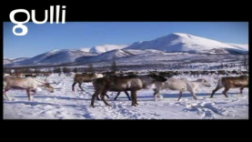 Protection des rennes par les Evènes
