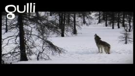 Tourner un film avec les loups