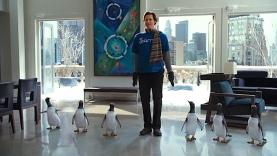 mister Poppers et ses pingouins