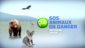 SOS animaux en danger : la bande-annonce !
