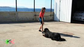 Copains Comme Cochons - Eléa et son chien sauveteur