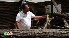 Copains Comme Cochons - Guy, terrariophile