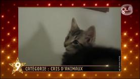 "Gulli Buzz Awards - Catégorie ""Cris d'animaux"""