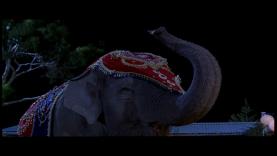 L'étonnant éléphant