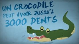 Incroyable Savoir - Les Crocodiles